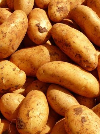 potatoes-5796__480